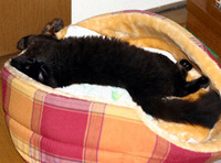 寝床で寝てくれたヒメ