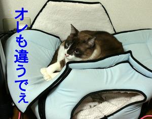 猫ハウスの「上で」寝る越後屋