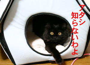 猫ハウスでリラックスしてる「ヒメ」